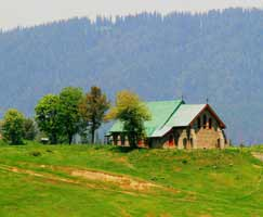 Patnitop Honeymoon Tour